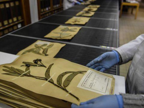 Press Vegetation for a 'Quarantine Herbarium'